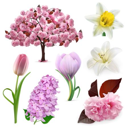 cerezos en flor: Establecer con flores de primavera, iconos, aisladas sobre fondo blanco