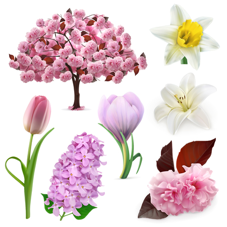 cherry blossoms: Set with spring flowers, icons , isolated on white background Illustration