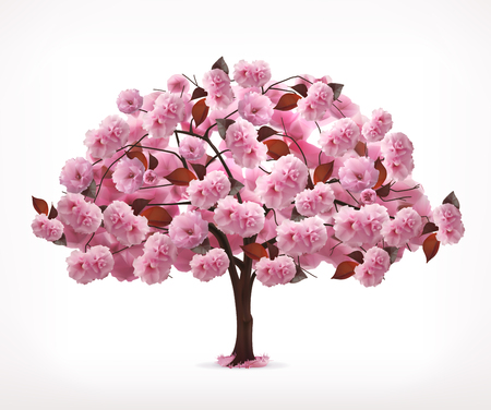 cherry tree: Spring pink tree, icon, isolated on white background Illustration