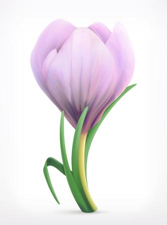 Sneeuwklokje, de lentebloem icon