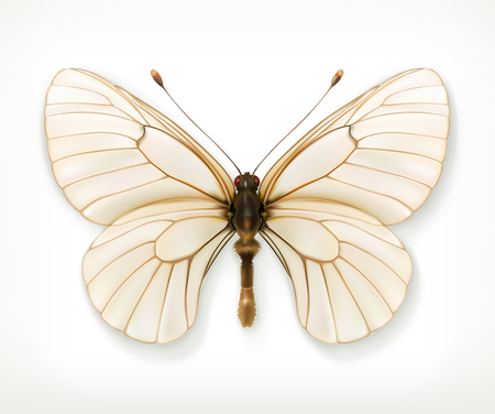 butterfly isolated: White butterfly, vector icon, isolated on white background