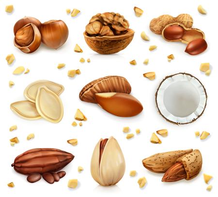 Walnut: Nuts trong vỏ, biểu tượng thiết lập, bị cô lập trên nền trắng Hình minh hoạ