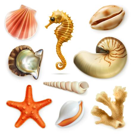 corales marinos: Conchas de mar, conjunto de iconos, aislados en fondo blanco Vectores