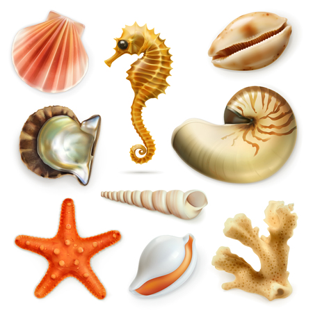 coral reef underwater: Seashells, icon set, isolated on white background