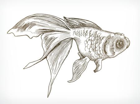dessin au trait: croquis de poissons d'or, vecteur de dessin à la main