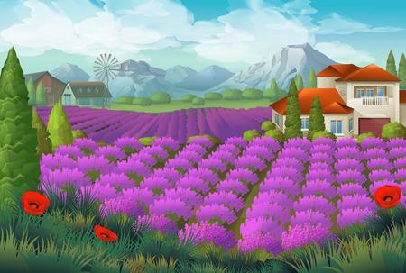 homestead: Lavender flowers field. Nature landscape, vector background
