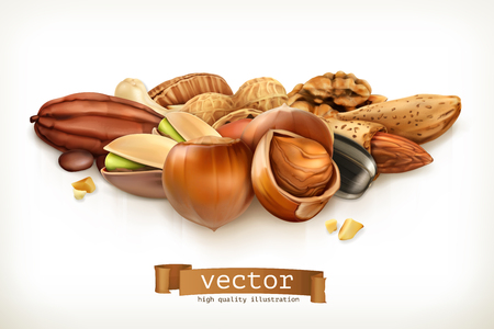 brazil nut: Nuts, vector illustration isolated on white