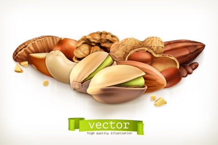 filberts: Nuts, vector illustration isolated on white