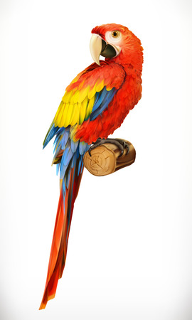 Ara parrot. Macaw. Photo realistic. 3d vector icon