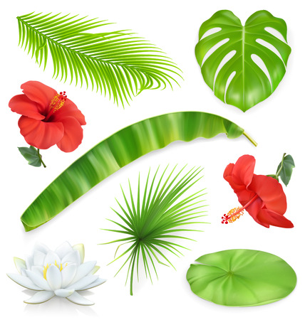 jungle plants: Jungle. Set of leaves and flowers. Tropical plants. 3d vector icons
