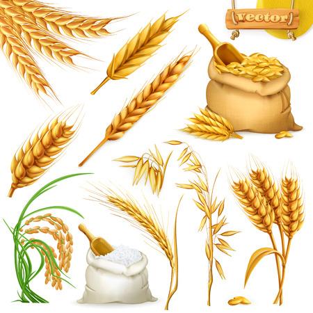 Pszenica, jęczmień, owies i ryż. Zestaw ikon zbóż.