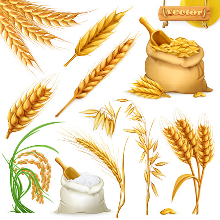 Wheat, barley, oat and rice. Cereals icon set.