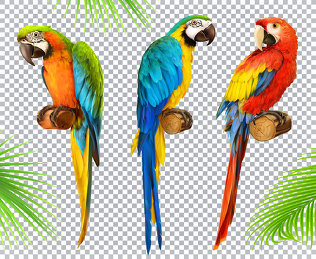 Ara parrot and Macaw photo realistic vector icon set.