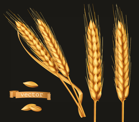 Ears of wheat. 3d vector icon set on black