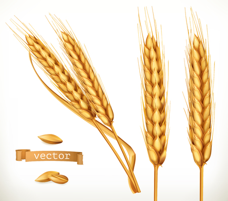 Ears of wheat. 3d vector icon set