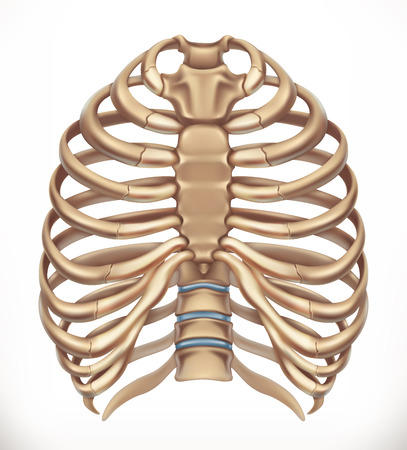Rib cage. Human skeleton, medicine. 3d vector icon Illustration