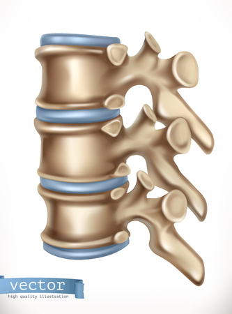 Spine structure. Human skeleton, medicine. 3d vector icon