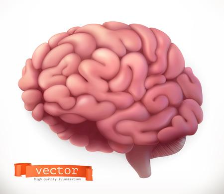 Brain. 3d vector icon