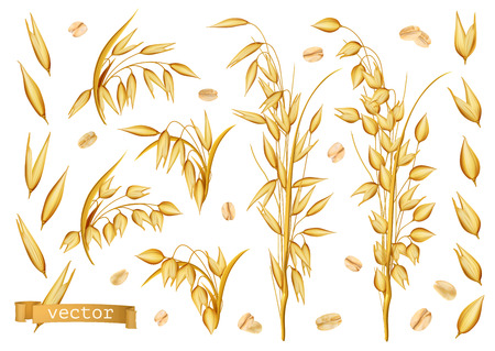 Oat plants, Rolled oats. 3d realistic vector icon set Çizim