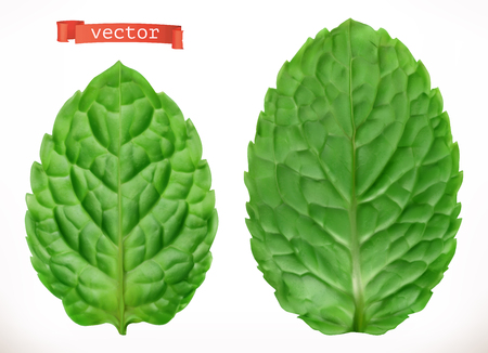 Leaf of mint. 3d realistic vector icon