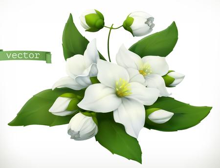 Jasmine. 3d realistic vector icon Çizim