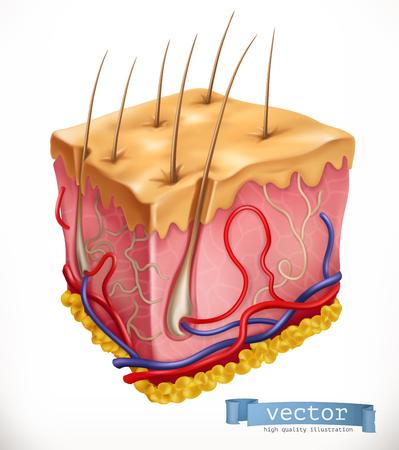 Hautstruktur. Medizin. 3D-Vektorsymbol