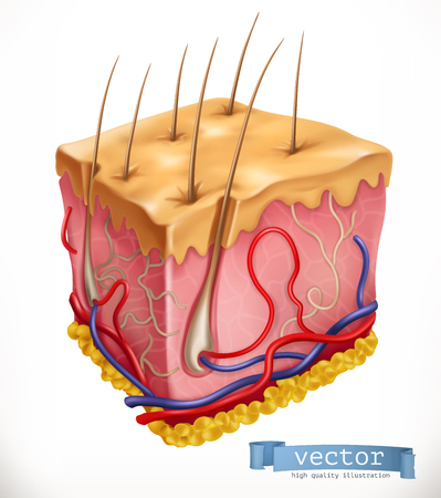 Skin Structure. Medicine. 3d vector icon