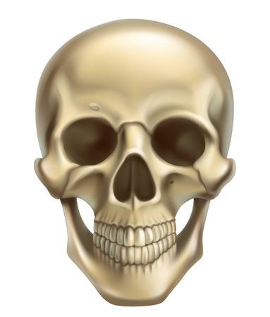 Skull. 3d realistic vector icon