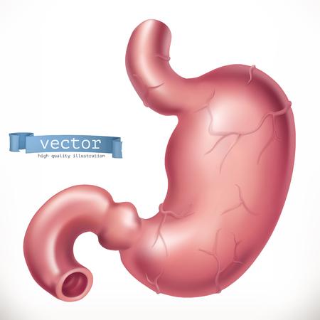 Stomach. Medicine, internal organs. 3d vector icon.eps