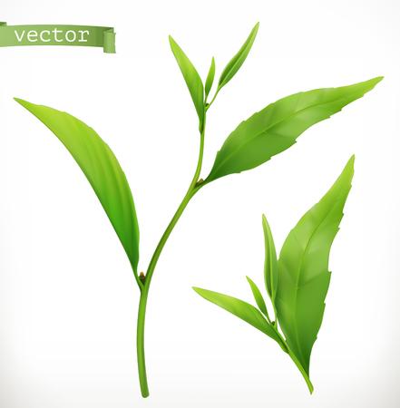 Teepflanze. 3D-realistisches Vektorsymbol