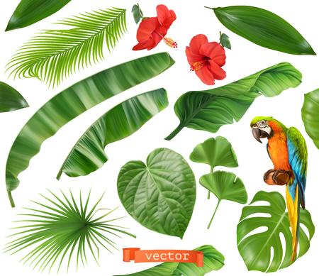 Botánica. Conjunto de hojas y flores. Plantas tropicales. Iconos vectoriales realistas 3d