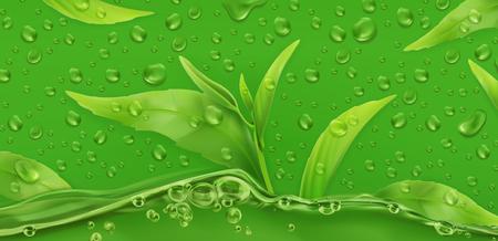 Drops. Green tea. 3d realistic vector