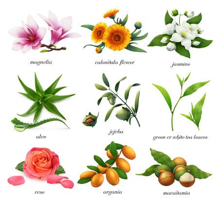 Medicinal plants and flavors. Magnolia, calendula flower, jasmine, aloe, jojoba, tea, rose, argania, macadamia. 3d realistic vector icon set