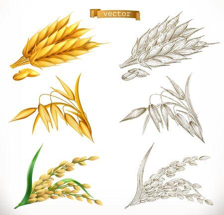 Épis de blé, avoine, riz. Réalisme 3D et styles de gravure. Illustration vectorielle Vecteurs
