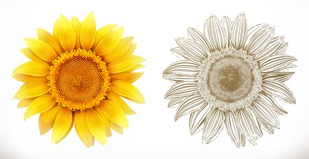 Sunflower. 3d realism and engraving styles. Vector illustration 일러스트