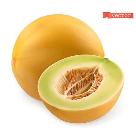 Melon. Fresh fruits. 3d realistic vector