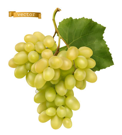 White sweet table grapes. Fresh fruit, 3d realistic vector