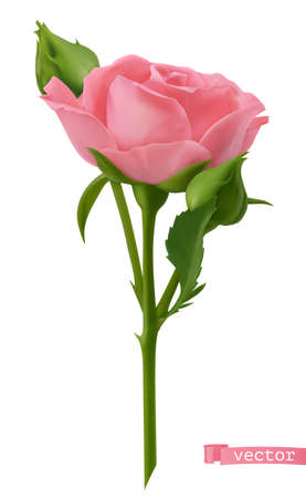 Pink Rose. 3d realistic vector object