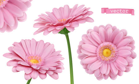 Pink Dahlia. Chamomile flowers 3d vector realistic set Ilustração