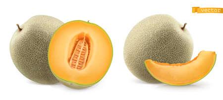 Sweet melon, cantaloupe. 3d realistic vector icon Ilustração
