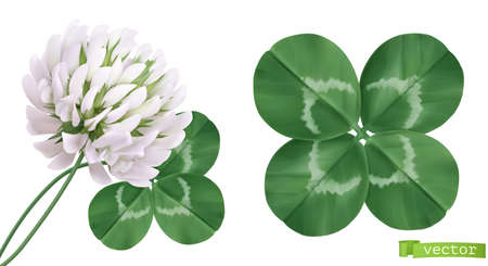 Four leaf clover and clover flower. 3d realistic vector icons