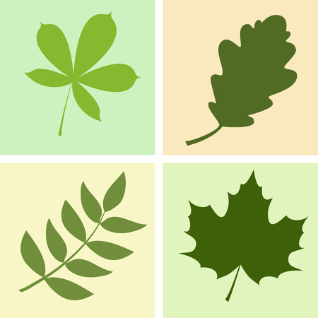 a set of four different leaves illustration