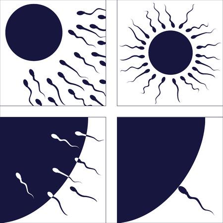 espermatozoides: conjunto de fotos que ilustran proceso de fertilización humana Vectores