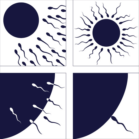 sperm cell: set of pictures illustrating human fertilization process