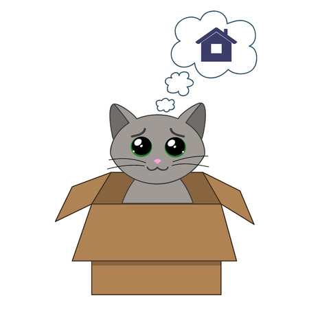 whisker: cute kitten in a cardboard box dreaming of home