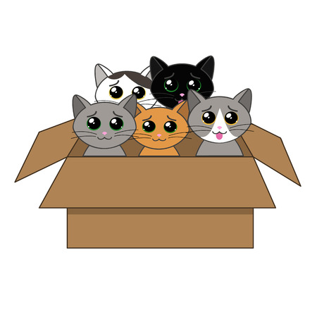 begging: cute kittens looking out of a cardboard box