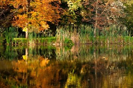 arcadia: Water reflection in Arcadia Park, Poland