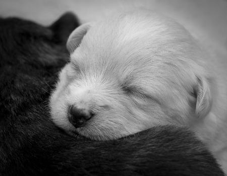 animalitos tiernos: Cachorros en blanco y negro Foto de archivo