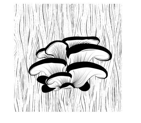 Oyster mushrooms grow on a tree, the wood texture.