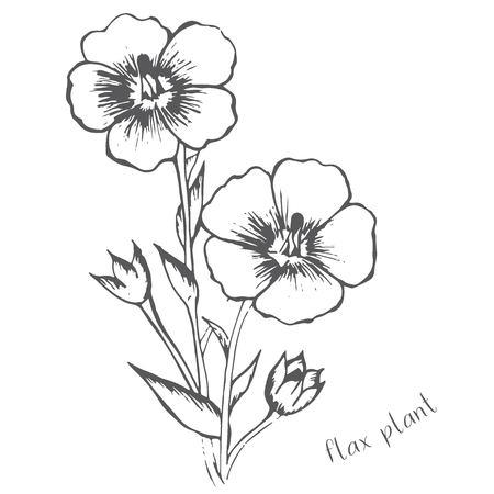 亜麻の花が手描きの 1 つの色